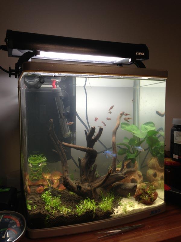 鱼缸加灯效果图