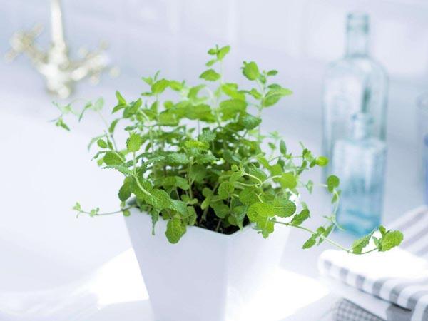 绿色植物效果图